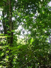 tropical hardwood rainforest plants in Costa Rica