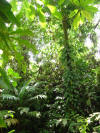 tropical hardwood rain forest plants Costa Rica